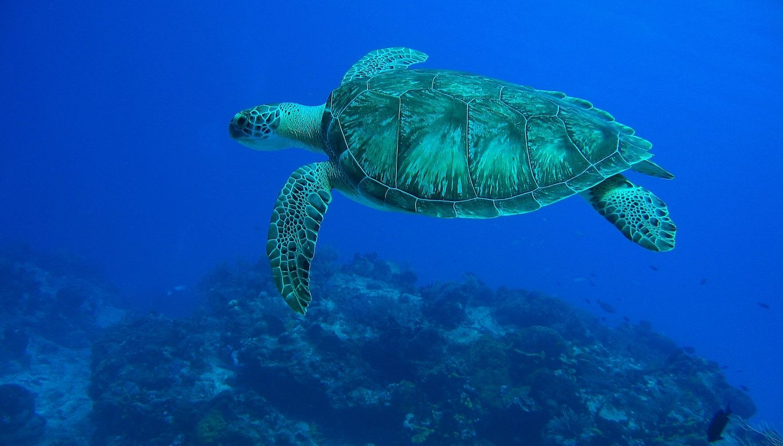 Cozumel Turtle Eagleray Divers