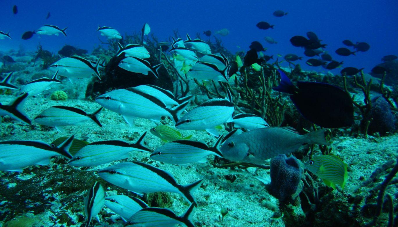 Cozumel Reef Fish Snorkel
