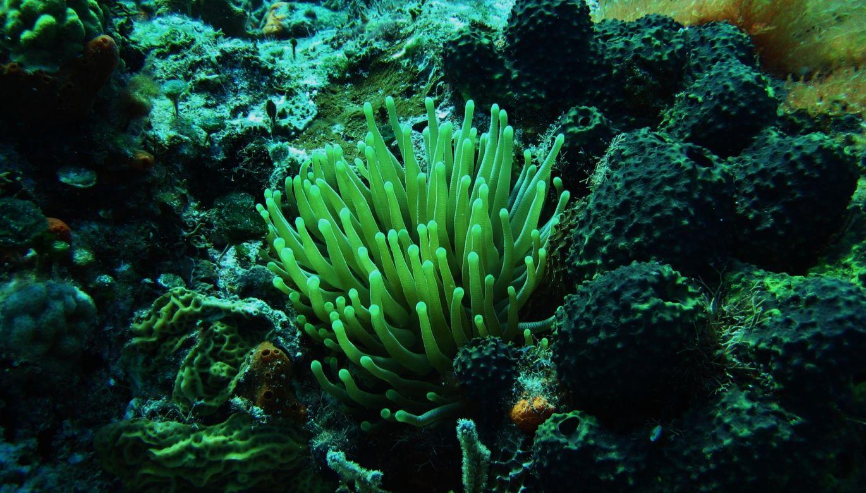 Cozumel Reef Flora