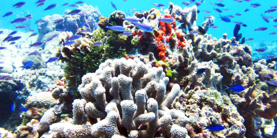 Coral Reef Cozumel