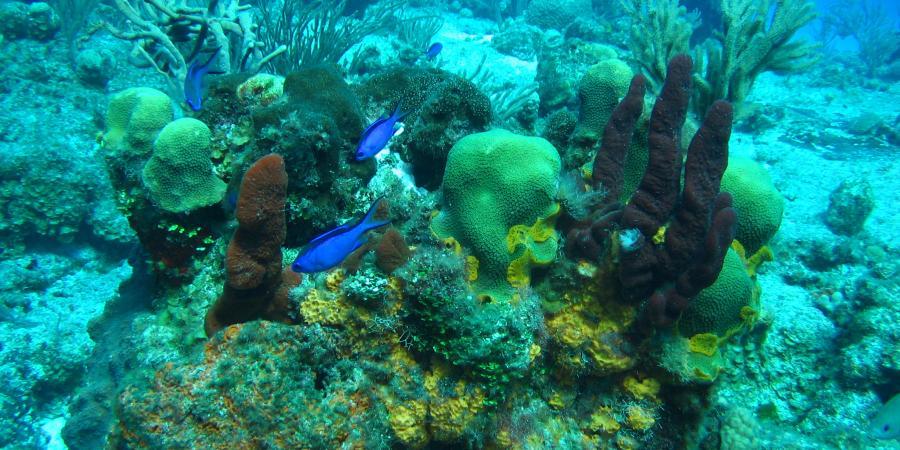 Cozumel Reef Fauna