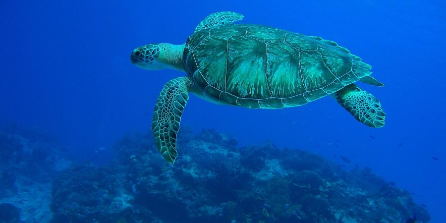 Cozumel Turtle Eagleray Divers